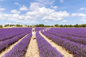 France, Provence Alps Cote D'Azur, Vaucluse, Banon. Woman Walking in Lavender Field in Summer (Mr) by Matteo Colombo