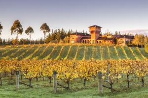 Highfield Estate Winery and Vineyards, Waihopai Valley, Blenheim, Marlborough, South Island by Matteo Colombo