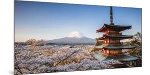 Pagoda Blossom by Matteo Colombo