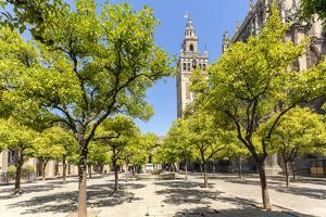 Spain, Andalusia, Seville. Patio De Los Naranjos in the Cathedral and Giralda Tower by Matteo Colombo