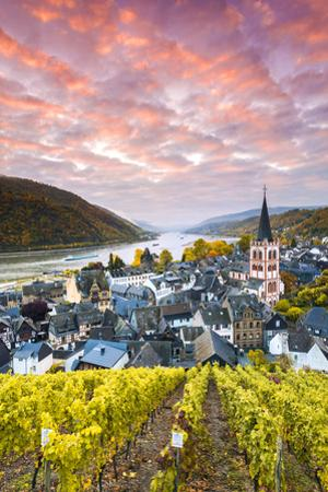 Sunrise over Vineyards, Bacharach, Rhineland-Palatinate, Germany by Matteo Colombo