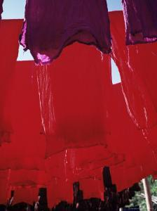 Red Dyed Cloth Drying, Marrakech, Morocco, North Africa, Africa by Matthew Davison