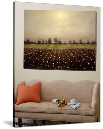 Parhelia: Cotton Field