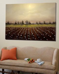 Parhelia: Cotton Field by Matthew Hasty