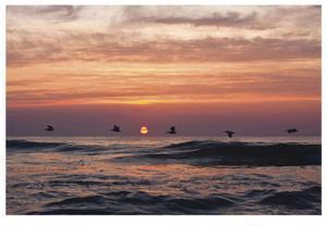Pelican Sunrise by Matthew Lusk