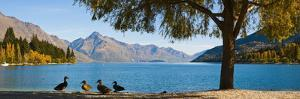 Autumnal Lake Wakatipu at Queenstown, Otago, South Island, New Zealand, Pacific by Matthew Williams-Ellis