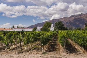 Bodega El Esteco, a Winery and Vineyard in Cafayate, Salta Province, North Argentina, Argentina by Matthew Williams-Ellis
