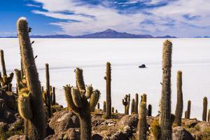 Cactus Covered Fish Island (Isla Incahuasi) (Inka Wasi), Uyuni, Bolivia by Matthew Williams-Ellis