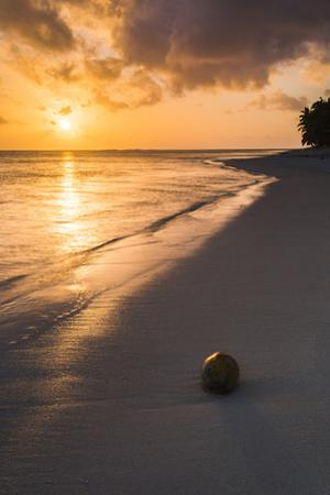 Coconut on a Tropical Beach at Sunset, Rarotonga Island, Cook Islands, South Pacific, Pacific by Matthew Williams-Ellis