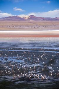 Flamingos at Laguna Colorada (Red Lagoon), Bolivia by Matthew Williams-Ellis