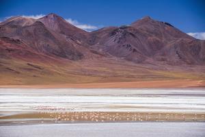 Flamingos at Laguna Hedionda, a Salt Lake Area in the Altiplano of Bolivia, South America by Matthew Williams-Ellis