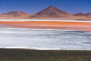 Flamingos at Red Lagoon (Laguna Colorada), Bolivia by Matthew Williams-Ellis
