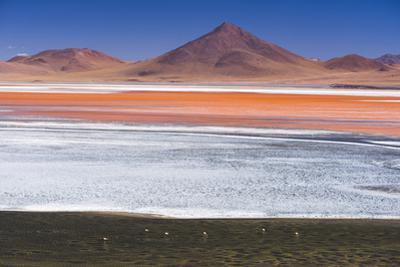 Flamingos at Red Lagoon (Laguna Colorada), Bolivia