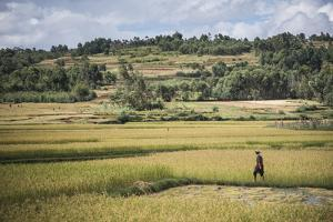 Lady in Rice Paddy Fields on Rn7 (Route Nationale 7) Near Ambatolampy in the Central Highlands by Matthew Williams-Ellis