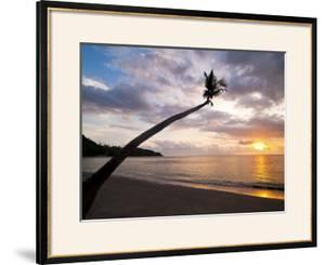 Overhanging Palm Tree at Nippah Beach at Sunset, Lombok Island, Indonesia, Southeast Asia by Matthew Williams-Ellis