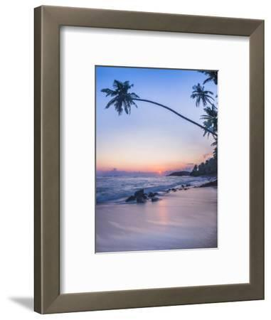 Palm Tree at Sunset on Tropical Mirissa Beach