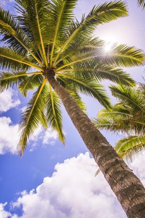 Palm Tree in Titikaveka, Rarotonga, Cook Islands, South Pacific Ocean, Pacific by Matthew Williams-Ellis