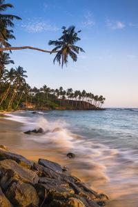 Palm Tree, Mirissa Beach, South Coast of Sri Lanka, Sri Lanka, Asia by Matthew Williams-Ellis