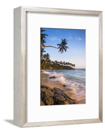 Palm Tree, Mirissa Beach, South Coast of Sri Lanka, Sri Lanka, Asia