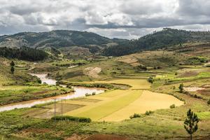 Rice Paddy Field Scenery Near Antananarivo, Antananarivo Province, Eastern Madagascar, Africa by Matthew Williams-Ellis