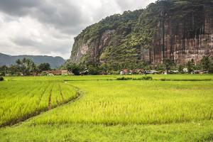 Rice Paddy Fields and Cliffs in the Harau Valley, Bukittinggi, West Sumatra, Indonesia by Matthew Williams-Ellis