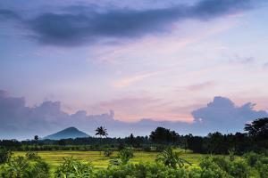 Sri Lanka Landscape at Sunrise, Paddy Fields Near Dambulla, Central Province, Sri Lanka, Asia by Matthew Williams-Ellis