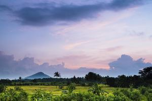 Sri Lanka Landscape at Sunrise, Paddy Fields Near Dambulla, Central Province, Sri Lanka, Asia by Matthew Williams-Ellis