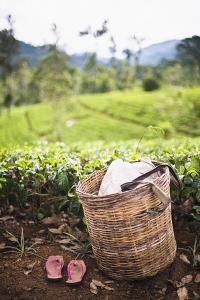 Tea Pluckers Basket and Shoes at a Tea Plantation by Matthew Williams-Ellis