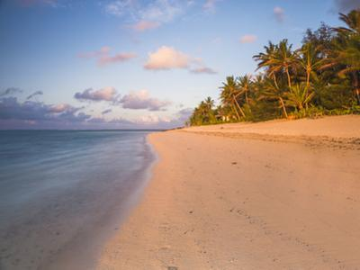 Tropical Beach with Palm Trees at Sunrise, Rarotonga, Cook Islands, South Pacific, Pacific by Matthew Williams-Ellis