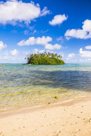 Tropical Island of Motu Taakoka Covered in Palm Trees in Muri Lagoon, Rarotonga, Cook Islands by Matthew Williams-Ellis
