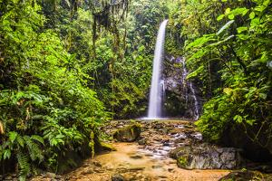 Waterfall San Vincente in an Area of Jungle Called Mashpi Cloud Forest in the Choco Rainforest by Matthew Williams-Ellis