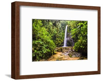 Waterfall San Vincente in an Area of Jungle Called Mashpi Cloud Forest in the Choco Rainforest