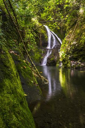 Wigmore's Waterfall, Rarotonga, Cook Islands, South Pacific, Pacific by Matthew Williams-Ellis