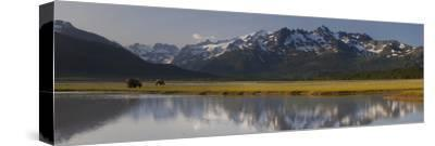 Brown Bears Forage Near a Waterway Reflecting the Aleutian Range