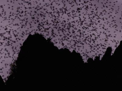A Cloud of Bats Fills the Twilight Sky over Sarawak