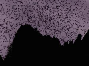 A Cloud of Bats Fills the Twilight Sky over Sarawak by Mattias Klum