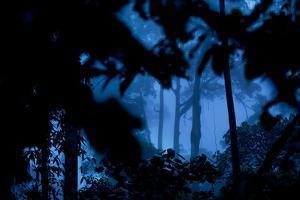 A Dense Rainforest on Borneo by Mattias Klum