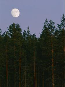 A Huge Moon Rises over an Evergreen Forest by Mattias Klum