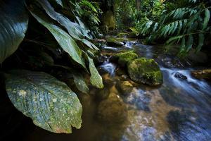A Rainforest Stream in Tijuca National Park by Mattias Klum