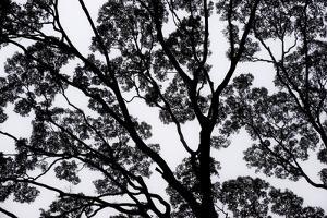 A Rainforest Tree in Morning Mist by Mattias Klum