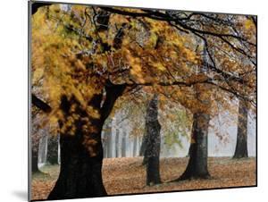 Autumn Foliage by Mattias Klum