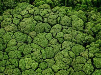 Borneo supports at least 15,000 known species of plants