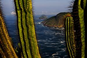 Cacti on Granite Cliffs Above the Atlantic Ocean in Serra Da Tiririca State Park by Mattias Klum