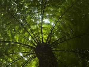 Looking Up into the Canopy of a Palm Tree by Mattias Klum
