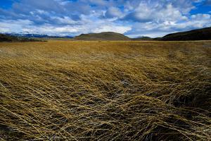 Marshland in Torres Del Paine National Park by Mattias Klum