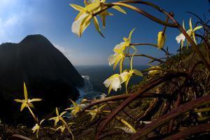 Orchids on Granite Cliffs Above the Atlantic Ocean in Serra Da Tiririca State Park by Mattias Klum