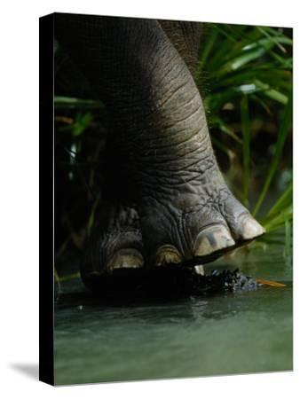 The Foot of an Elephant over a Rain Forest Stream