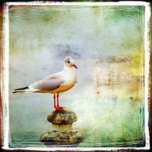 Sea Gull-Artistic Retro Styled Picture by Maugli-l