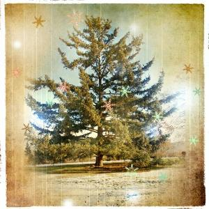 Vintage Winter Background With Pine Tree by Maugli-l