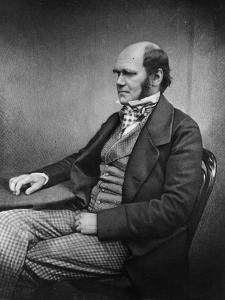 Charles Darwin (Engraving) by Maull & Fox